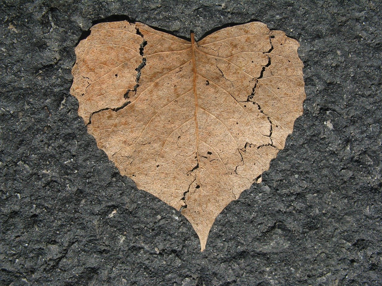heart, broken, nature love