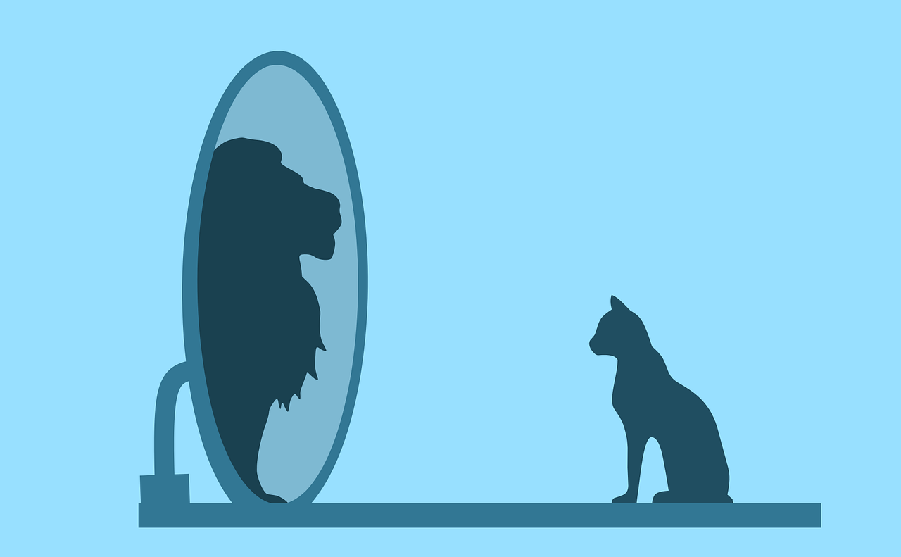 cat, mirror, lion